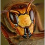 Insects Of Our World Up Close And Personal