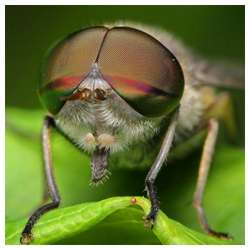 Insects-Of-Our-World-Up-Close-And-Personal