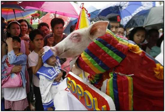 Costumed-parade-of-hogs-in-Bulacan-of-Manila-2