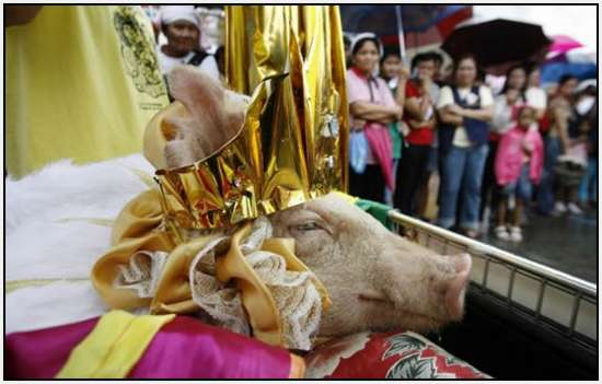 Costumed-parade-of-hogs-in-Bulacan-of-Manila-4