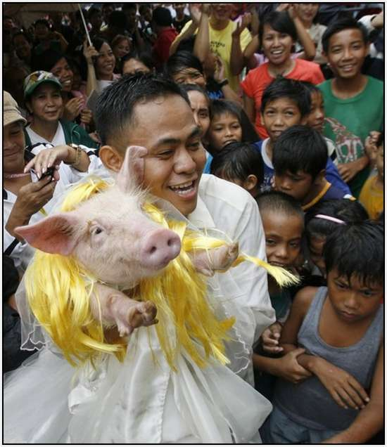 Costumed-parade-of-hogs-in-Bulacan-of-Manila-7