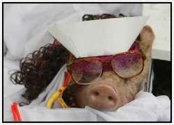 Costumed-parade-of-hogs-in-Bulacan-of-Manila