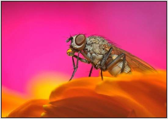Beautiful-Macro-Photography-by-Bonali-Giuseppe-39