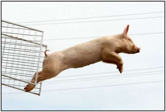 The-World-Championship-When-Pigs-Fly-2