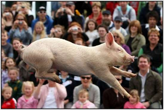 The-World-Championship-When-Pigs-Fly-5