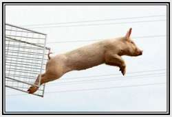 The-World-Championship-When-Pigs-Fly