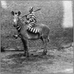 Amazing Old Photos With Unusual Draught Animals