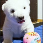 Flocke The Cute Little Polar Bear