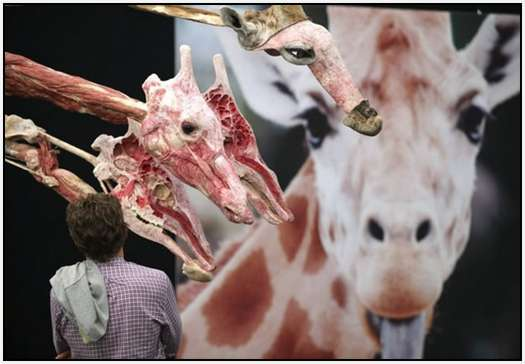 Animal-Body-Worlds-Exhibition-in-Germany-2