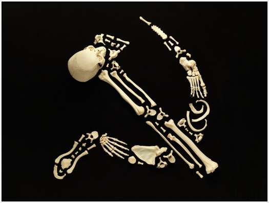 Art-Made-From-Real-Human-Bones-4