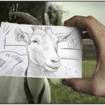 Pencil Drawings Combined With Photographs