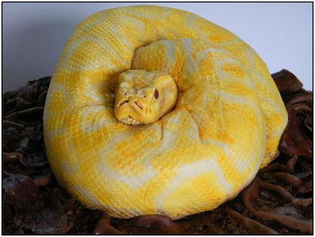 The-Terrifyingly-Realistic-Snake-Cake-2